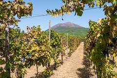Vesuvius & Vineyard, semi-private, wine tasting