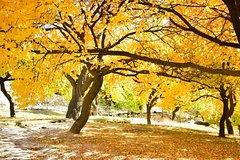 Autumn Trip to Hunza Valley & Skardu- Pakistan - (12D 11N)