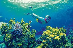 Salir de la ciudad,Excursiones de más de un día,Excursión a Barrera de Coral