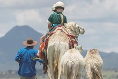 Camel Trail Ride