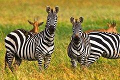 4 Day Tanzania Luxury Safari
