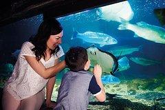 Imagen Billets coupe-file : aquarium Sea Life de Londres