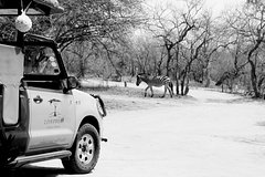 5-Day Discover the Kruger Park