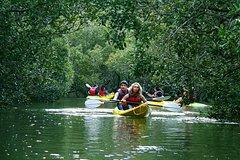 Imagen Bay Of Islands Nature Cruise And Kayaking Adventure