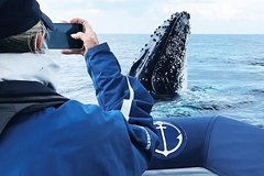 Imagen Premier Whale Watching Byron Bay