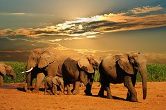 Cape Town Best Of Big Five Safari Fullday Tour