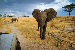 2 Days In Ruaha National Park-