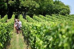 Excursión con cata de vinos para grupos pequeños a la región de Champagne desde París