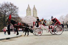 Standard Central Park Horse Carriage Ride