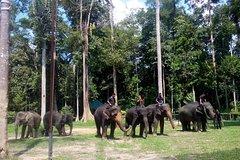 Imagen Nursing with Love at Elephant Sanctuary