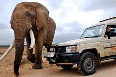 Addo Elephant National Park - FD01