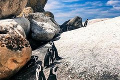 Cape Of Good Hope and Cape Point Private Tour