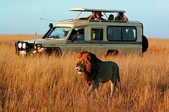 Cape Town Private The Best of Big five Tour