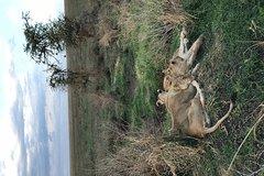 4 days safari Tarangire National Park Ngorongoro Serengeti National Park