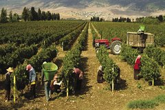 Van & Driver - Wine Tasting