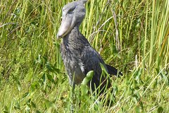 7 Days Bangwewulu Wetland Tour