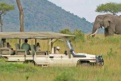 Cap Town Private Best of Aquila Safari Tour