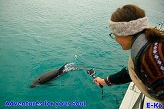Imagen Ship Cove and Dolphin Eco-Tour Cruise