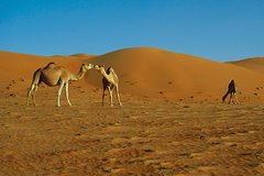 Excursions,Multi-day excursions,Excursion to Wahiba Sands