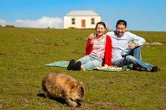 Imagen Wineglass Bay And Maria Island Wildlife Scenic Flight From Hobart
