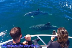 Imagen Half-Day Dolphin Viewing Eco-Tour from Picton