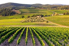 Ecorted Tour to Ancient Wine Cities: Montalcino, San Gimignano and Chianti