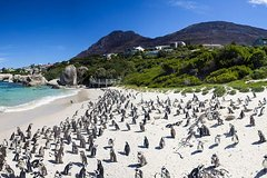 Cape town Private Cape peninsula Penguin and Robben Island Tour