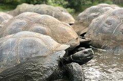 Imagen Giant Tortoise Reserve - Lava Tubes  2PM