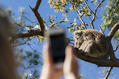 Imagen Exceptional Port Lincoln, Seafood and Wildlife Tour