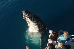 Imagen Morning or Afternoon Whale Watching Tour on the MV Whalesong