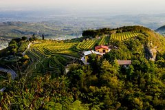 From Verona and Garda: Private day tour in Valpolicella with lunch