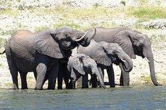Chobe Safari Experience Day Trip