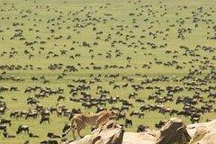 6 Days Serengeti Migration Safari ( Ngorongoroserengetinorther Serengeti)