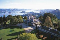Dunedin Wildlife and Larnach Castle Tour (Cruise Ship Passenger)- Half Day