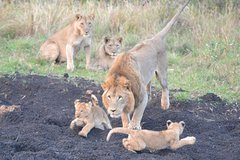 Big 5 Safari Durban Day Tour