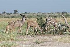 Khutse Game Reserve weekend getaway