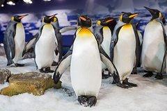 Imagen Kelly Tarlton's Sea Life Aquarium Entry Ticket