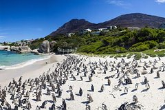 Cape town Private Cape peninsula penguin Tour