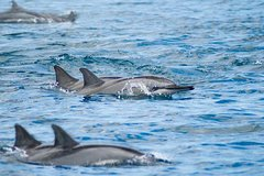 Day - Dolphin trip and Benitier Island with Lunch