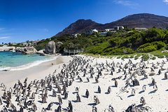 Cape Town Private Cape point Penguin Tour