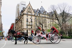 Horse Carriage Ride to The Loeb Boathouse/Tavern on the Green at Central Park
