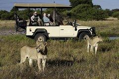 Cape Town Private The Best Of Big Five Safari Tour