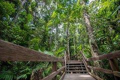 Salir de la ciudad,Actividades,Excursiones de un día,Actividades de aventura,Salidas a la naturaleza,Excursión a Bosque tropical de Daintree,Excursiones desde Cairns