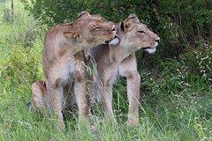 Full Day Game Safari In Chobe National Park-Botswana
