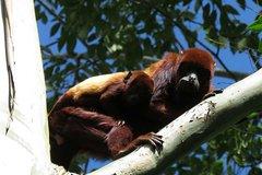 Imagen Recorrido de un día al Santuario de la flora y fauna Otún Quimbaya