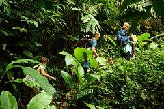 1 day Trek-Explore Nam Ha National Protected Area in Luang Namtha
