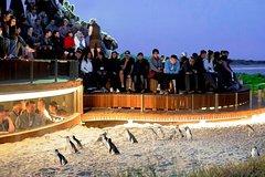 Imagen Excursion d'une journée en petit groupe à Phillip Island au départ de Melbourne