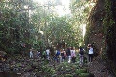 Imagen Excursion d'une demi-journée dans la forêt équatoriale de Saint Christophe