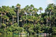 Imagen 3-Day Amazon Jungle Tour at Hacienda Concepción