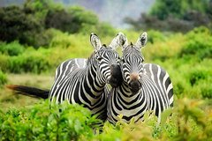 1 Day Lake Mburo National Park